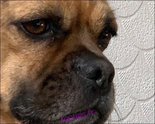 Une image d'un chien avec zoom flou.